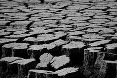 Dry land. In black and white Stock Photography