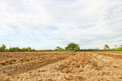 Land for farm Stock Photography