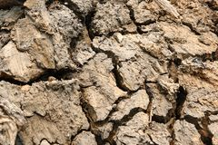 Dry Land with Cracked. Close Up Stock Images