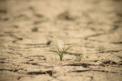 Dry. Land cracked when dry season at northeast of Thailand Stock Image