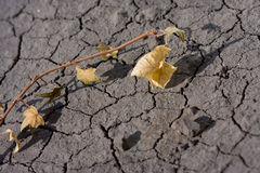 Dry land and dead plant Royalty Free Stock Images