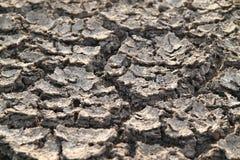 Dry land in the desert. Cracks on the surface Stock Photo