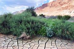 Dry land in the desert Stock Image