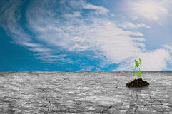 Dry land with green plants growing and sky. Royalty Free Stock Image