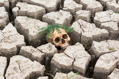 Dry land head skull Royalty Free Stock Photo