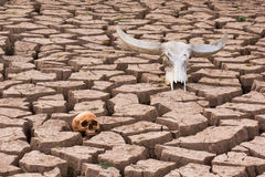 Dry land head skulls Stock Photography