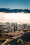 Dry land with mist. Dry land with dry bush and mist near Mount Bromo, Indonesia Royalty Free Stock Images