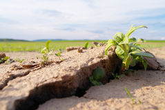 Dry land with plant Stock Image