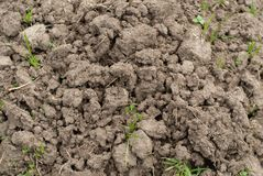Dry land prepared for agricultural land stock photo