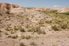Dry land, small bushes of mountain plateau at sunny day Stock Photo