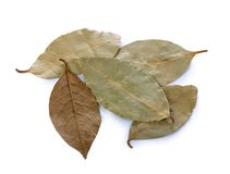 Dry laurel leaf isolated on white Royalty Free Stock Photos