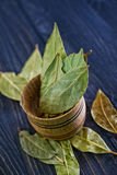 Dry laurel Stock Image