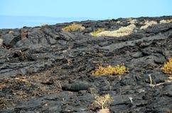Dry Lava Texture Stock Photo