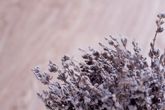 Dry lavender Royalty Free Stock Photo