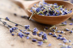 Dry Lavender Royalty Free Stock Image