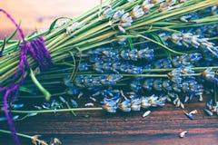 Dry lavender Stock Image