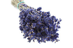 Dry lavender bunch Stock Photography