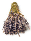 Dry Lavender. Bunch over white background Royalty Free Stock Image