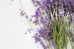Dry lavender closeup. royalty free stock photo