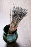 Dry lavender in flower pot Stock Images
