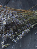 Dry lavender flowers Stock Images