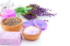 Dry Lavender herbs Stock Photos