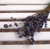Dry lavender Stock Photo
