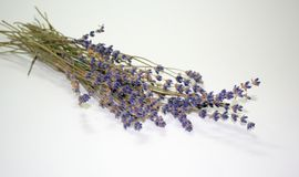 Dry lavender Stock Images