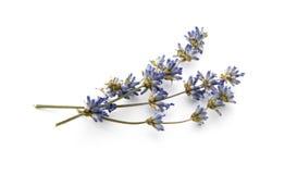 Dry lavender. On white background Stock Photos