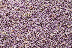 Dry lavenders background. Close up of dry lavenders background Stock Image