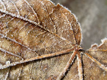 Dry leaf 16. Macro of an dry autumn leaf Stock Photography