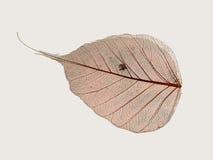 Dry leaf. Macro photo of a dry leaf Stock Photos