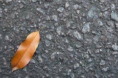 Dry Leaf. Laying on the road Stock Photography