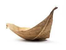 Free Dry Leaf Royalty Free Stock Images - 38727779