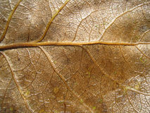 Dry leaf 5. Macro of dry autumn leaves Stock Photography