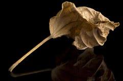 Dry Leaf. Dry Ornamental Leaf Royalty Free Stock Image