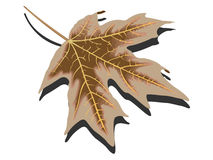 Dry leaf against white Stock Photos
