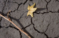 Dry leaf on arid land Stock Photo
