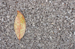 Dry leaf on asphalt texture Royalty Free Stock Image