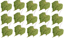 Dry leaf background Stock Photos