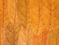 Dry leaf background Stock Photo