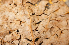 Dry leaf Stock Photos