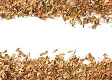 Dry leaf background on white Stock Image