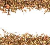 Dry leaf background on white Royalty Free Stock Photo
