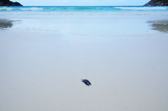 Dry leaf on the beach and beautiful sea. Dry leaf on the beach and beautiful blue sea Royalty Free Stock Photo