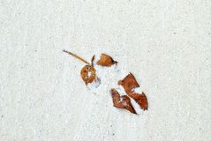 Dry leaf on beach with white sand Royalty Free Stock Photography