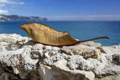 Dry leaf and beautiful turquoise sea Stock Photo