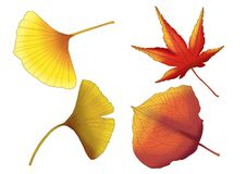 Dry leaf Brown paint. On white background stock illustration