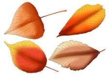 Dry leaf Brown paint. On white background royalty free illustration