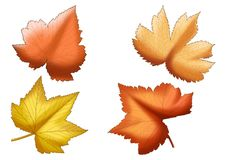 Dry leaf Brown paint on white background royalty free illustration